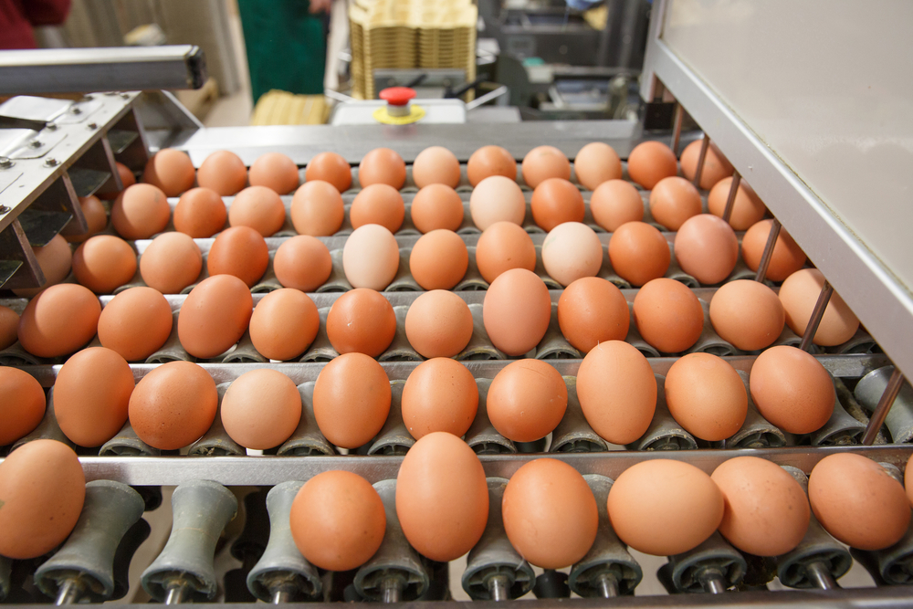 egg supply business